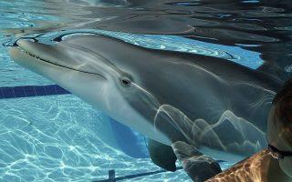 delfinia-rompot-anti-gia-alithina-gia-thematika-parka-vinteo0