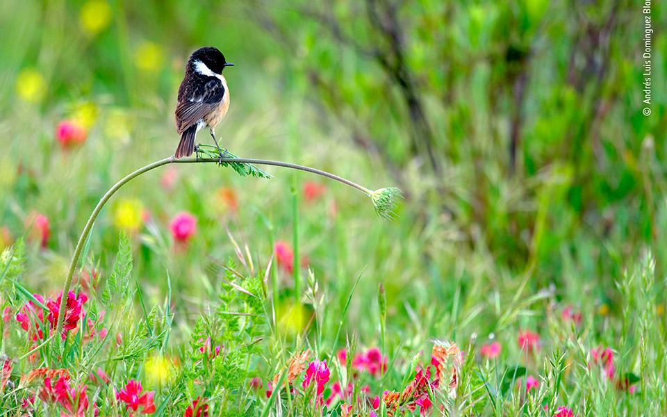 © Andrés Luis Dominguez Blanco, Wildlife Photographer of the Year 2020