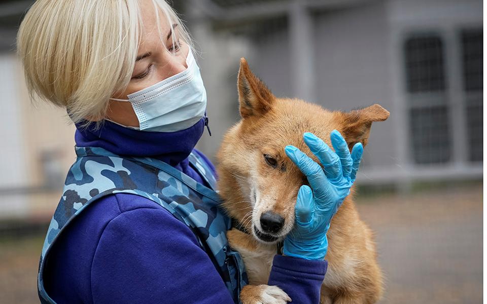 Εκπαιδευμένα σκυλιά ανιχνεύουν αξιόπιστα τον κορωνοϊό | Η ΚΑΘΗΜΕΡΙΝΗ
