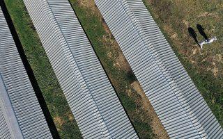 Περίπου 1,2 εκατομμύρια μινκ εκτρέφονται σε φάρμες της Δυτικής Μακεδονίας για τη γούνα τους. (Φωτογραφίες: Αλέξανδρος Αβραμίδης/Reuters)