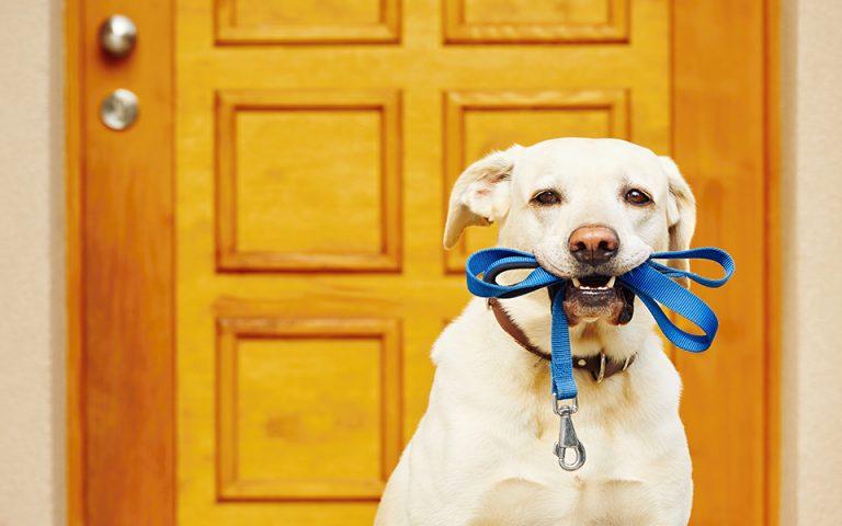 Οι σκύλοι φαίνεται να μυρίζουν τη λοίμωξη COVID-19