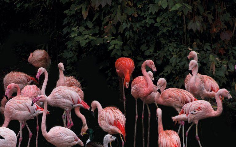 Οι αναγνώστες ταξιδεύουν: Ανόβερο, το μέλλον της άγριας ζωής