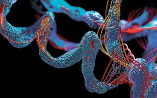 Oι πρωτεΐνες εμφανίζονται ως αλυσίδες χημικών στοιχείων· εν συνεχεία διπλώνουν, δημιουργώντας τρισδιάστατα σχήματα καθοριστικά της λειτουργίας τους. (Φωτ. SHUTTERSTOCK)