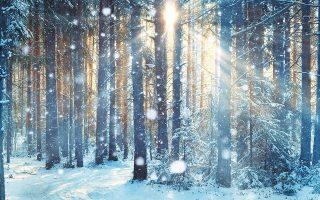 «Σε ένα μεγάλο δάσος ζούσε ένας φτωχός ξυλοκόπος με τη φτωχιά γυναίκα του». (Φωτ. SHUTTERSTOCK)