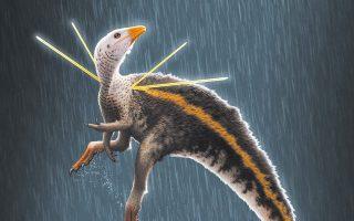 Το μικρόσωμο αρπακτικό, Ubirajara jubatus, που τρεφόταν με κρέας, έζησε πριν από 110 εκατ. χρόνια.