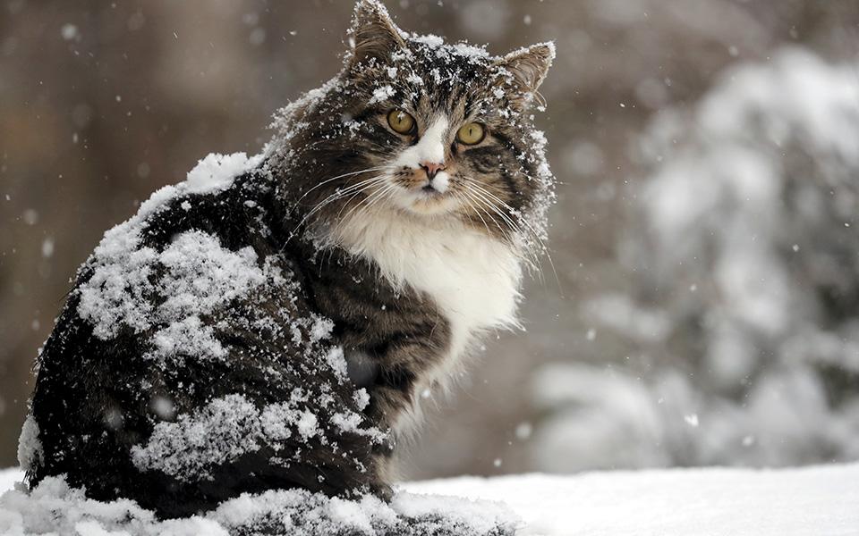 Και με ήλιο και με χιόνι