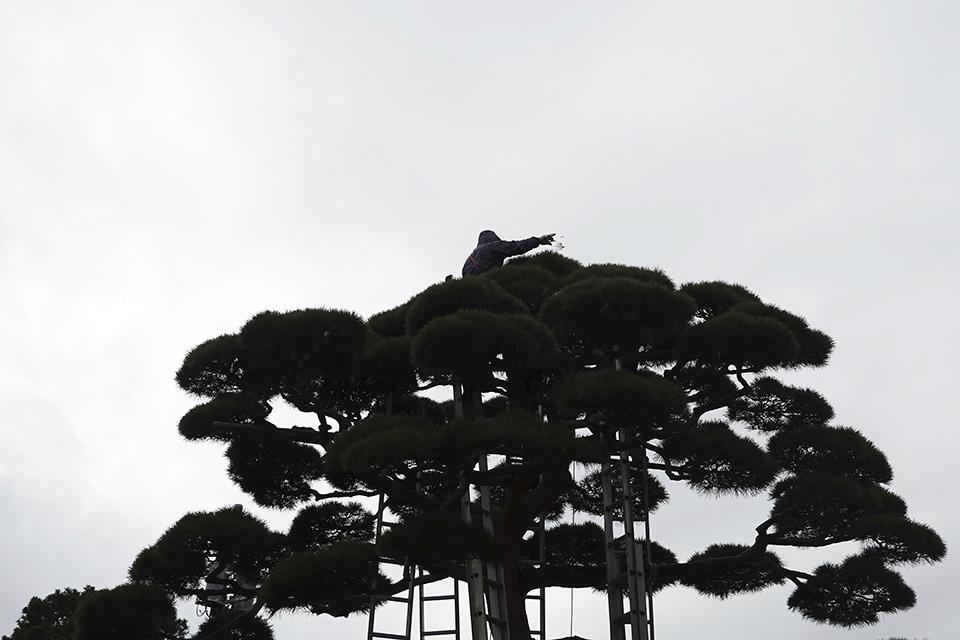 Ιαπωνική φύση