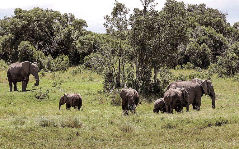 Δορυφορική καταμέτρηση των ελεφάντων