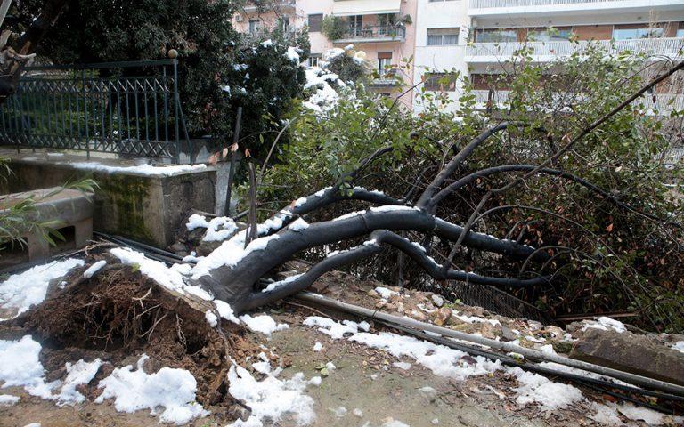 ΔΕΔΔΗΕ: Με άδεια δασαρχείου το κλάδεμα των δέντρων