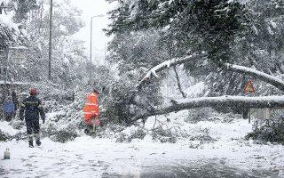 Επιχείρηση απομάκρυνσης δέντρου που έπεσε στη Νέα Ερυθραία (φωτ. INTIME NEWS).