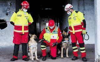 Οι σκύλοι της ομάδας έχουν λάβει ειδική εκπαίδευση.