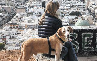Η αρμοδιότητα της προστασίας των ζώων συντροφιάς μεταφέρεται από το υπουργείο Αγροτικής Ανάπτυξης στο υπουργείο Εσωτερικών. (Φωτ. ΙΝΤΙΜΕ NEWS)