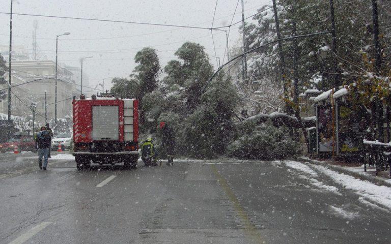 Εικόνες από την πτώση δέντρου κοντά στη Βουλή
