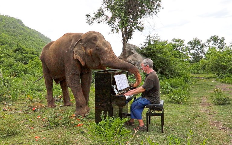 Ο Paul Barton παίζει πιάνο σε ελέφαντες που σώθηκαν από την αιχμαλωσία