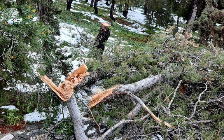 Meteo: Γιατί έπεσαν τόσα δέντρα στην κακοκαιρία