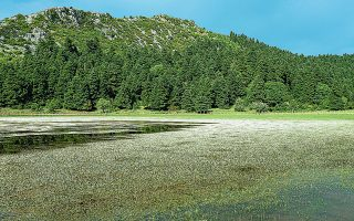 Η λίμνη Νεβρόπολης στο Καλλίδρομο και νάρκισσοι στην Οίτη. Το πρόγραμμα LIFE είχε ως αντικείμενο την προστασία οικοτόπων στα δύο όρη.