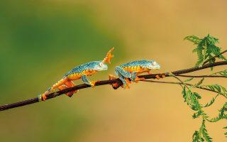 Οι βάτραχοι αποτελούν αγαπημένο θέμα της Μπαρμπόρα Πολίβκοβα. © Barbora Polivkova