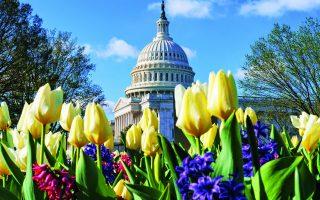 Tα λουλούδια έχουν ανθίσει έξω από το κτίριο του Καπιτωλίου, στην Ουάσιγκτον. Ο νέος πρόεδρος επιθυμεί την άνθηση και της αμερικανικής οικονομίας, ώστε να αντιμετωπίσει ισχυρότερη τον διεθνή ανταγωνισμό. Φωτ. A.P.
