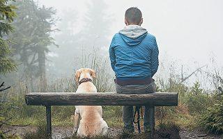 Oι περισσότερες ευρωπαϊκές χώρες έχουν πλέον δοκιμασμένους, επιτυχημένους νόμους με υγιείς βάσεις, πάνω στις οποίες χτίζουν την πολιτική για την προστασία των ζώων (φωτ. Shutterstock).