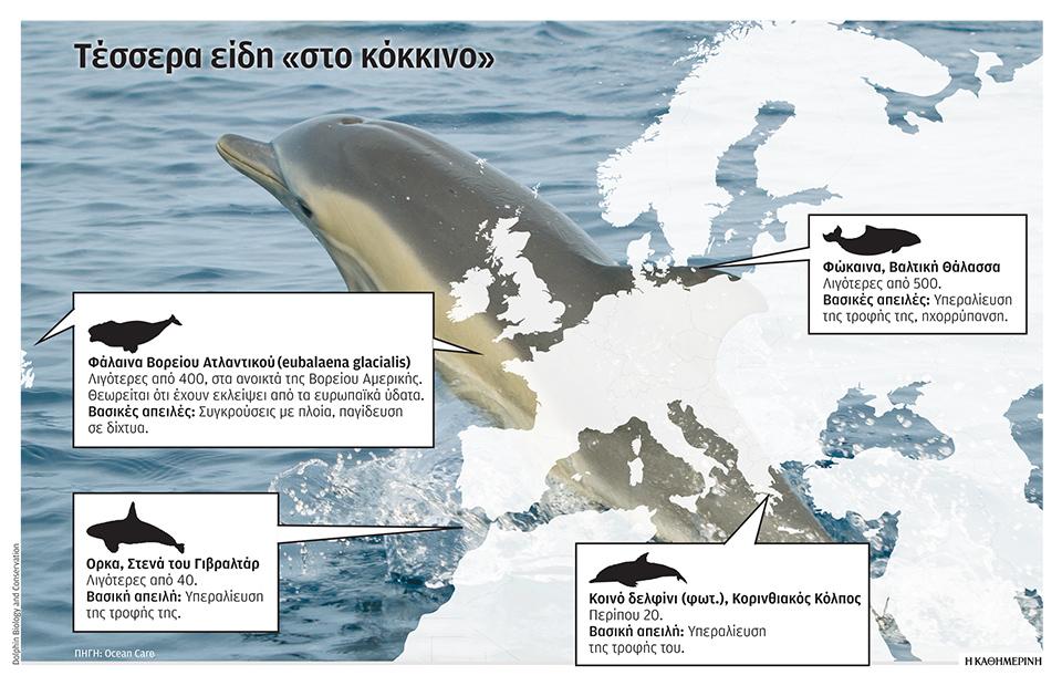 se-kindyno-delfinia-kai-falaines1
