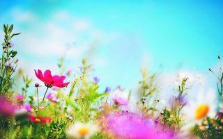 Ολοι ονειρεύονται τραπέζια στην εξοχή, σούβλες να περιστρέφονται, παρτέρια γεμάτα λουλούδια, χώμα και θάλασσα, ορίζοντα. Κυρίως ορίζοντα...
