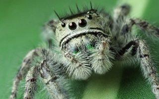 vinteo-nyt-meletontas-ta-matia-mias-arachnis0