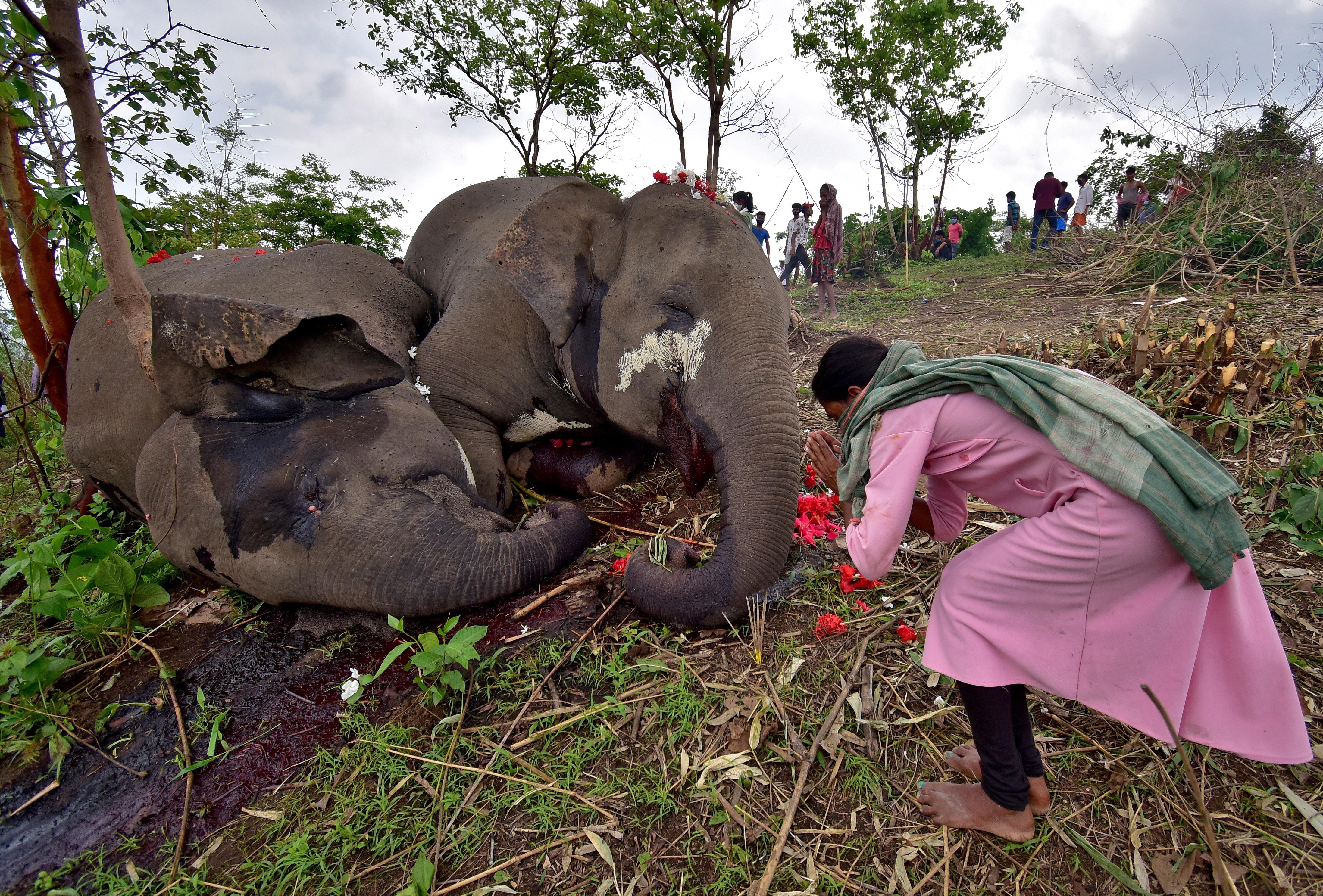 nekroi-18-agrioi-asiatikoi-elefantes-mesa-se-prostayteyomeno-dasos-stin-india1