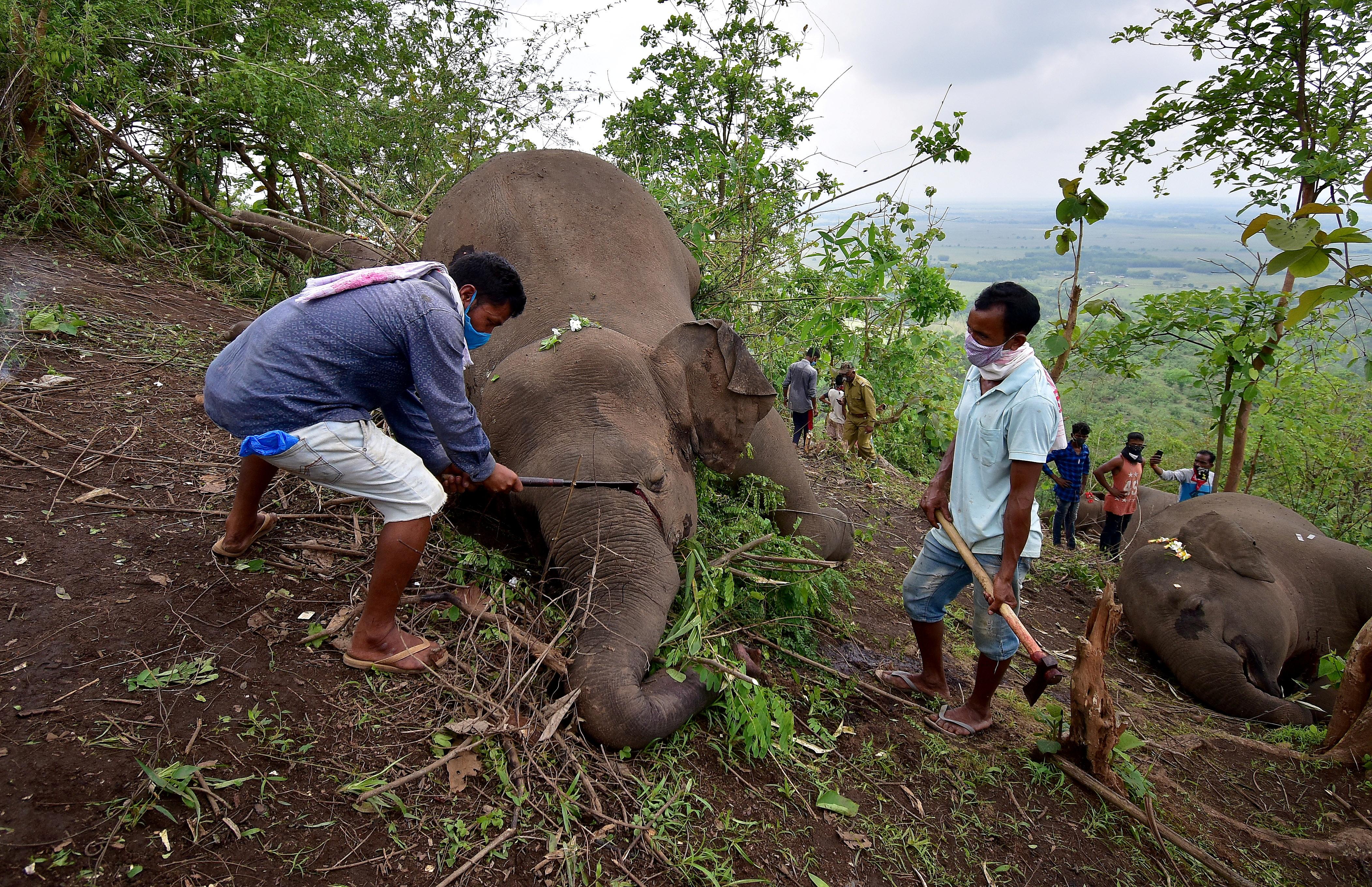 nekroi-18-agrioi-asiatikoi-elefantes-mesa-se-prostayteyomeno-dasos-stin-india3
