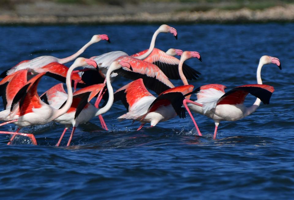 ta-flamingko-epestrepsan-sto-nayplio-eikones3