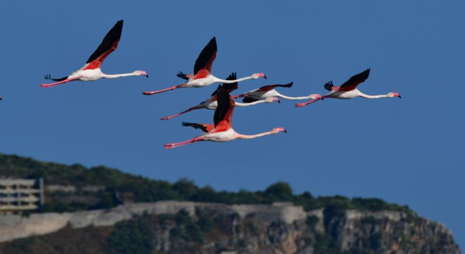 ta-flamingko-epestrepsan-sto-nayplio-eikones5