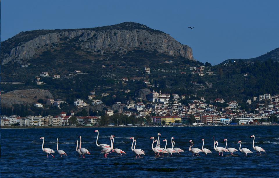 ta-flamingko-epestrepsan-sto-nayplio-eikones1
