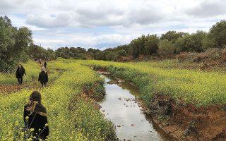 Το έργο στον Ερασίνο, σύμφωνα με περιβαλλοντικές οργανώσεις, θα υποβαθμίσει σημαντικά τη βιοποικιλότητα του ρέματος, θα εξαφανίσει τα απειλούμενα είδη και θα καταστρέψει προστατευόμενους και οριοθετημένους υγροτόπους.