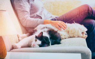 Ο περιορισμός της αέναης δημιουργίας αδέσποτων ζώων συντροφιάς βρίσκεται στο επίκεντρο της στόχευσης του νέου νομοσχεδίου για την ευζωία των ζώων, που έχει τεθεί σε διαβούλευση. (Φωτ. Shutterstock).