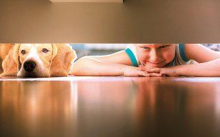 «Aντιμετωπίζουμε την ένταξη ενός ζώου σ' ένα σπίτι με την ίδια σοβαρότητα που αντιμετωπίζουμε την ένταξη ενός παιδιού σ' ένα σπίτι: όχι σαν να είναι κτήμα μας, αλλά σαν να πρόκειται για ένα συγκάτοικο», λέει η Ελλη Βιντιάδη.