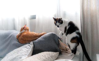 Οι περισσότερες αντιδράσεις αφορούν τις υποχρεώσεις του ιδιοκτήτη δεσποζόμενου ζώου συντροφιάς και κυρίως τη διάταξη που επιβάλλει την υποχρεωτική στείρωση (φωτ. SHUTTERSTOCK).