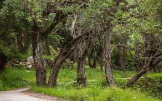 Οι βουλευτές υιοθετούν στο σύνολό τους τα επιχειρήματα όσων διαμαρτύρονται για το περιεχόμενο των δασικών χαρτών, μιλώντας για «απώλεια περιουσιών», «τραγικά λάθη», για «περιουσίες που μετατρέπονται από τη μια μέρα στην άλλη σε δάσος» (φωτ. SHUTTERSTOCK).