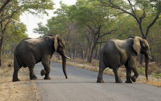 kina-ethniki-kinitopoiisi-gia-toys-elefantes-poy-pigan-ekdromi-561391195