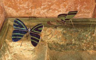 Οι πεταλούδες της Λίτη συμβολίζουν την ψυχή.