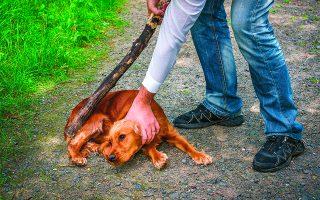 Η σκληρότητα απέναντι στα ζώα συνδέεται με τη σκληρότητα και τη βία απέναντι στους ανθρώπους, ιδιαίτερα στα παιδιά. Τέτοια περιστατικά θεωρούνται από τους ειδικούς της ψυχικής υγείας ως κορυφή του παγόβουνου. Είναι κρίκοι στην ίδια εγκληματική αλυσίδα. Φωτ. SHUTTERSTOCK