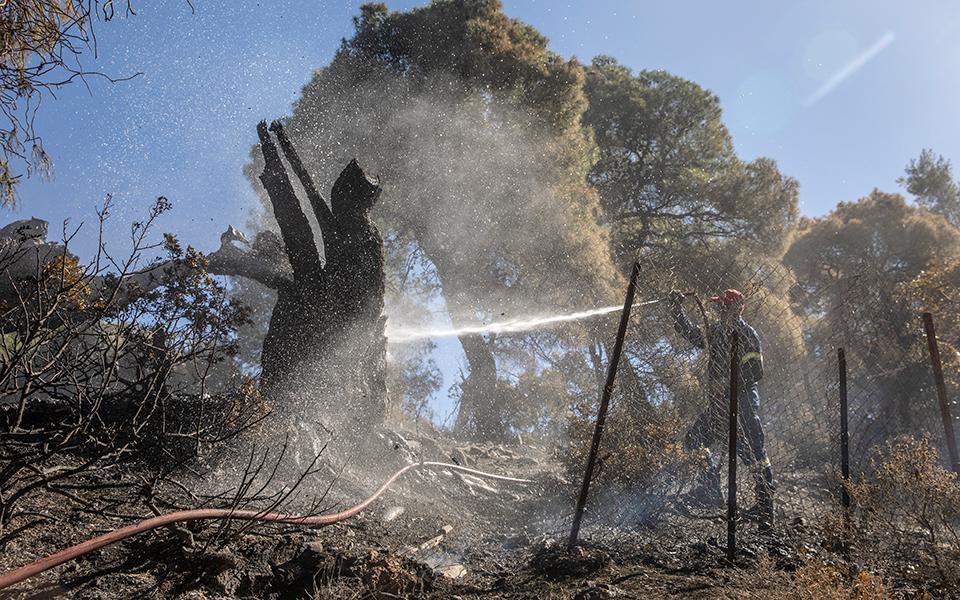 Πυρκαγιά σε δασική έκταση στα Μέγαρα