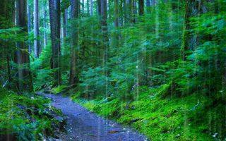 Η αναγέννηση των δασών αλλάζει τον υδρολογικό κύκλο σε πολύ μεγαλύτερη επιφάνεια από αυτήν των ίδιων των δασών.