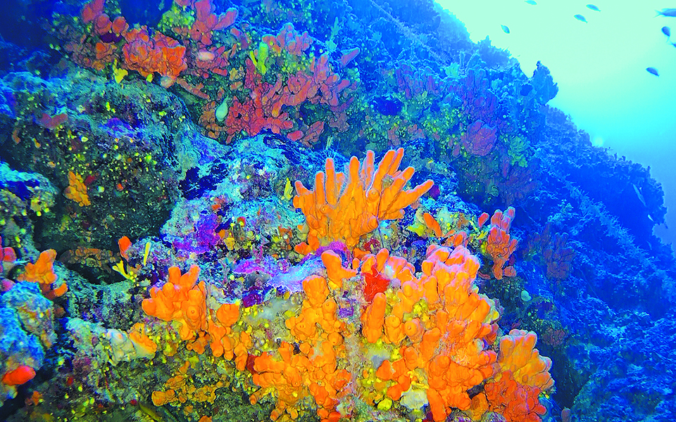 korallia-ilikias-7-500-eton-krymmena-sto-aigaio6