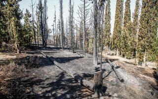 Η προχθεσινή πυρκαγιά έκαψε μικρή έκταση, περί τα 90-100 στρέμματα. Σύμφωνα με τις πρώτες εκτιμήσεις, η φωτιά ξεκίνησε ακριβώς δίπλα από την περιφερειακή οδό (φωτ. INTIME NEWS).