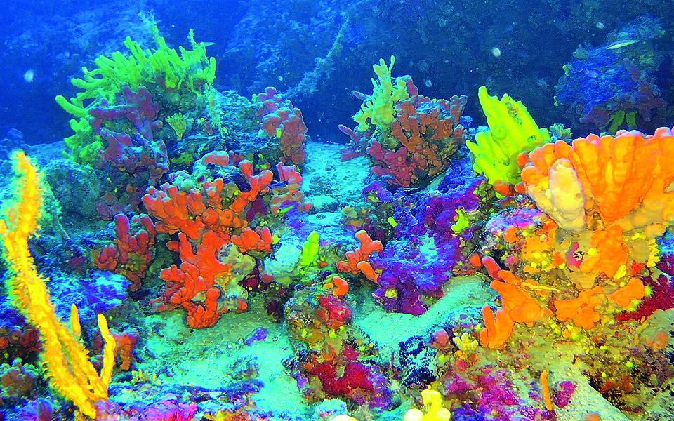 korallia-ilikias-7-500-eton-krymmena-sto-aigaio4