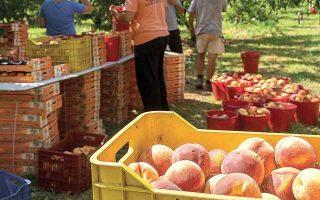 Ο αγροδιατροφικός τομέας εμφάνισε εντυπωσιακή ανθεκτικότητα το 2020, σημειώνοντας οριακή άνοδο κύκλου εργασιών, έναντι πτώσης 14% για τη λοιπή βιομηχανία.