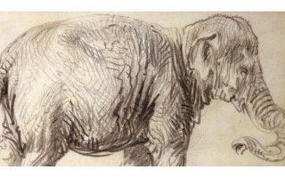 enas-elefantas-gia-ton-remprant-561462829