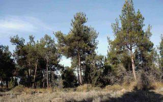 Η υπαγωγή των διευθύνσεων δασών και των δασαρχείων στο υπουργείο Περιβάλλοντος δίνει την ευκαιρία για καλύτερη αντιμετώπιση των προβλημάτων.
