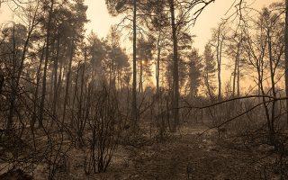 «Οταν αναφλεγεί ένα δάσος με τόσο μεγάλη πυκνότητα βλάστησης, δημιουργεί μεγάλο θερμικό φορτίο και μήκος φλόγας, με αποτέλεσμα οι επίγειες πυροσβεστικές δυνάμεις να μην μπορούν να πλησιάσουν την πυρκαγιά», αναφέρει στην «Κ» ο κ. Μητσόπουλος (φωτ. SOOC).
