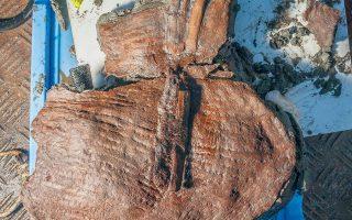 Τα ευρήματα εντοπίστηκαν σε μια περιοχή όπου ο Φρανκ Γκοντιό και η ομάδα αρχαιολόγων του ανακάλυψαν έναν μεγάλο τύμβο με πολυτελή ελληνικά ταφικά κτερίσματα.