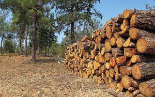 """Οπως σημειώνεται στην έκθεση του WWF Ελλάς, «οι άνθρωποι παλαιότερα """"περιποιούνταν"""" τα δάση και τις δασικές εκτάσεις περισσότερο, γιατί ζούσαν άμεσα από τους πόρους που τους προσέφεραν (ξύλο, ρετσίνι, μελισσοκομία)». Φωτ. INTIME NEWS."""